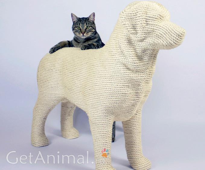 необычная когтеточка для кошек