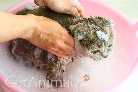 помыть кота