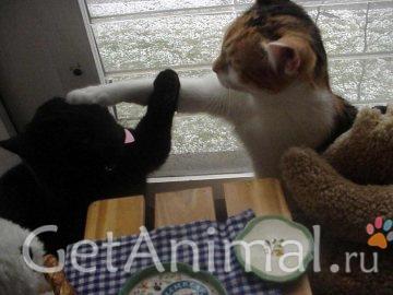 взрослые коты