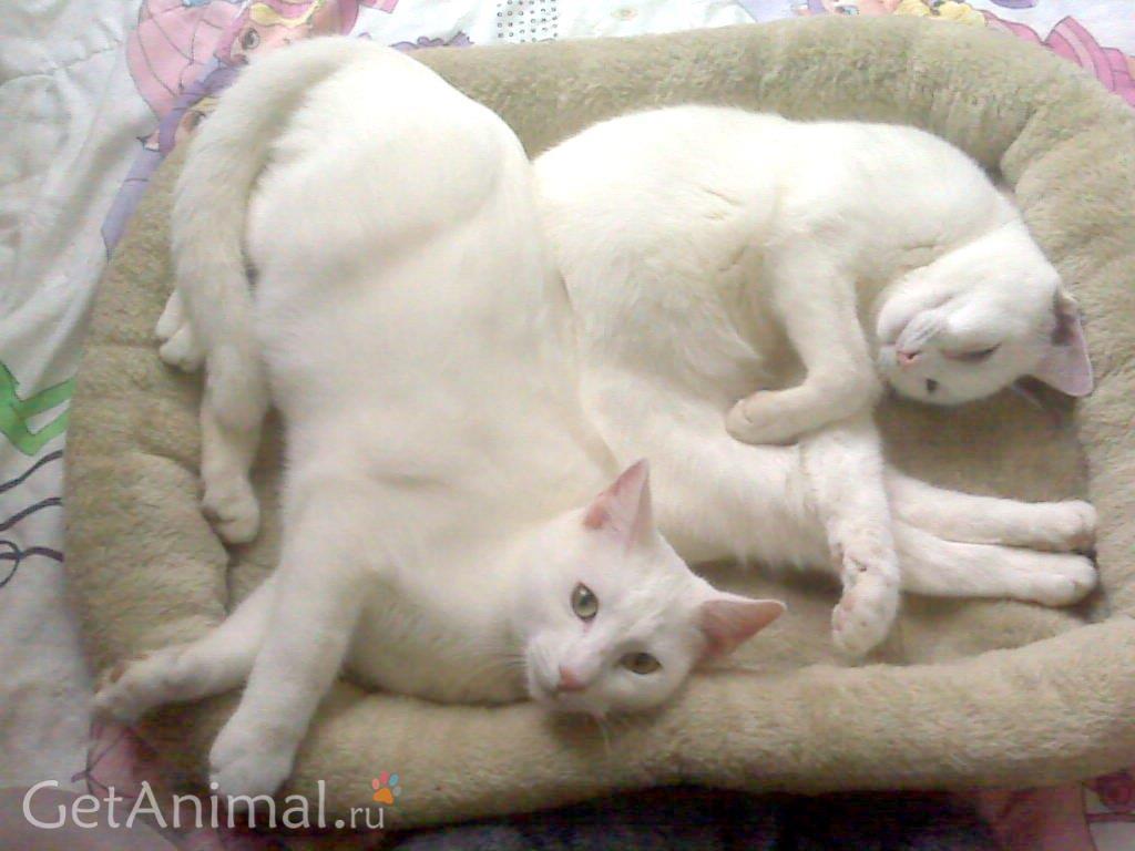 взрослые коты спят