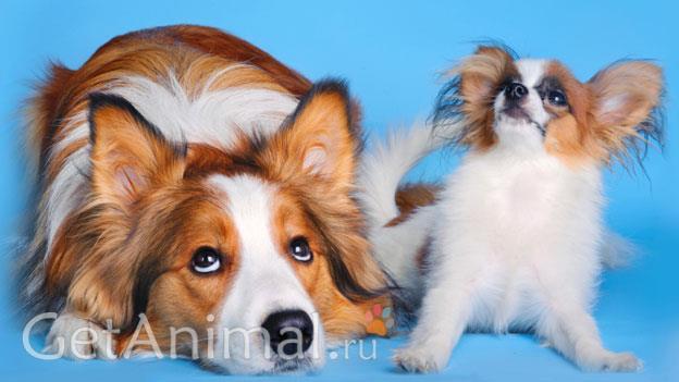 крупные и мелкие собаки